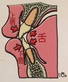 歯並びの説明の写真